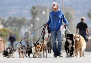 Где гулять с собакой у дома