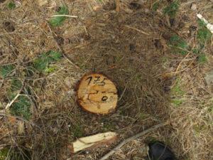 Куда обращаться если незаконно вырубают лес