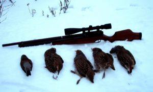 Разрешена ли охота куропатку зимойв рязанской области