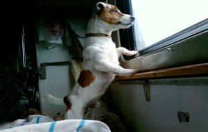 Вагоны для перевозки животных ржд плацкарт