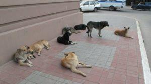 Как бороться с бездомными собаками по закону