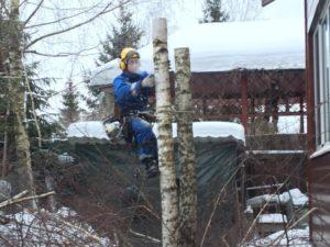 Вырубка деревьев на участке в собственности