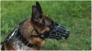 Собака должна быть в наморднике закон