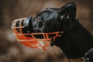 Закон о намордник для собак с 01 01 2020