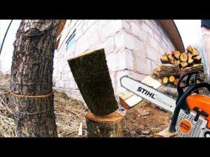 Можно ли пилить валежник в лесу на дрова 2020