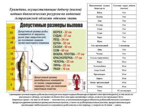 Нормы вылова рыбы в ростовской области в 2020