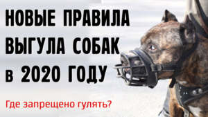 Новый закон о домашних животных 2020